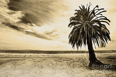 The Palm Swayed As The Storm On The Ocean Blew In Print by Artist and Photographer Laura Wrede
