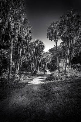 Florida Nature Photograph - The Palm Trail B/w by Marvin Spates