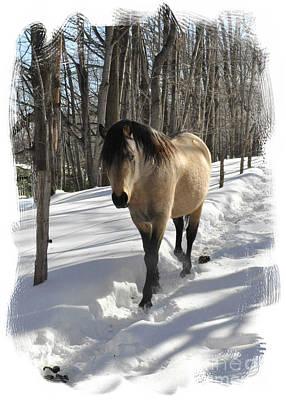 The Paso Fino Stallion Named Brio Print by Patricia Keller