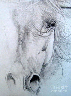 Wild Horse Drawing - The Passionate Eye by Joey Nash