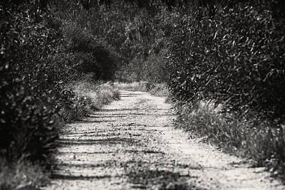 Black And White Photograph - The Path by Liran Eisenberg