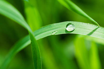 Turf Photograph - The Pearl - Featured 3 by Alexander Senin