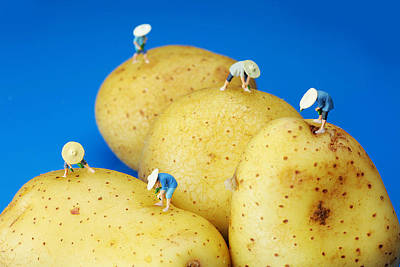 Surrealism Photograph - The Planting On Potatoes Little People On Food by Paul Ge