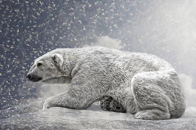 Bear Photograph - The Polar Bear by Joachim G Pinkawa