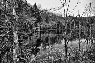 Fall Photograph - The Pond On Limekiln Road by David Patterson