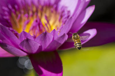The Promise Of Pollen Print by Priya Ghose