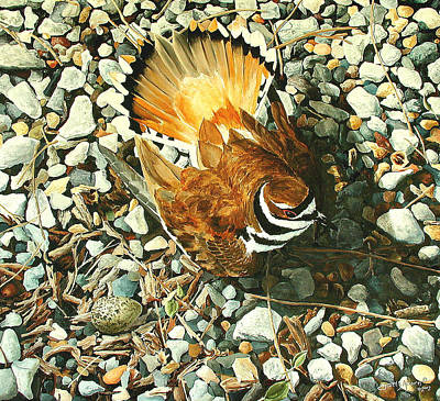 Killdeer Painting - The Protector by Scott Alcorn