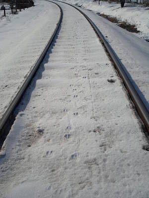 Photograph - The Railroad Tracks by Jenna Mengersen