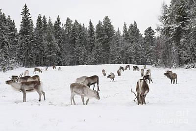 The Reindeer Of Santa Claus Original by Silvia Alcantara