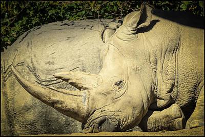 Rhino Photograph - The Rhino Horn by LeeAnn McLaneGoetz McLaneGoetzStudioLLCcom
