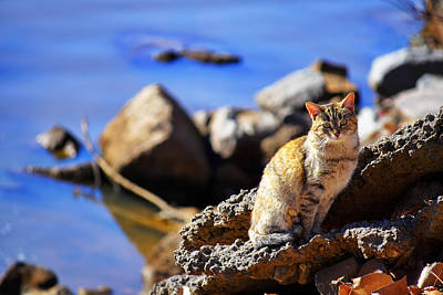 Cat Photograph - The River Life 1 Of 3 by Jason Politte