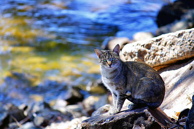 Of Calico Cats Photograph - The River Life 2 Of 3 by Jason Politte