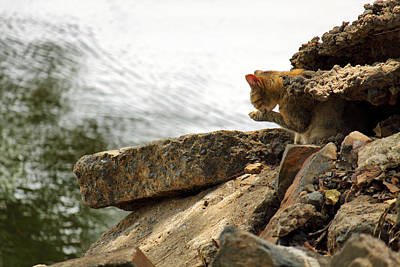 Of Calico Cats Photograph - The River Life 3 Of 3 by Jason Politte