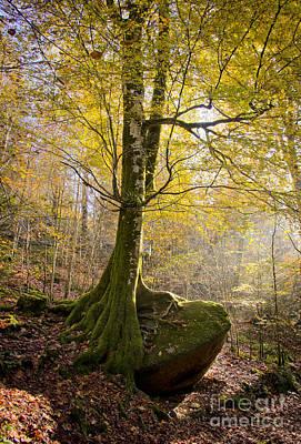 The Rock Tree Print by Sophie De Roumanie