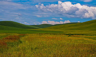 Fields Photograph - The Rolling Hills Of The Palouse by David Patterson