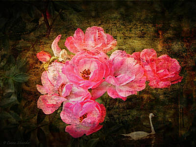 Swan Digital Art - The Romance Of Roses by Lianne Schneider