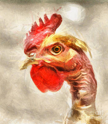 Drawing - The Rooster Portrait by Daliana Pacuraru