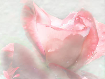 Roses Digital Art - The Rose Dream by Camille Lopez