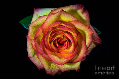 Flowers Photograph - The Rose by Tod and Cynthia Grubbs