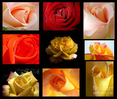 Odon Photograph - The Roses by Odon Czintos