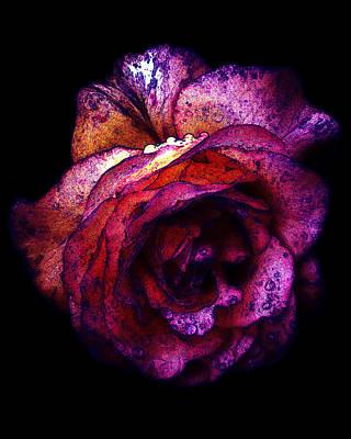 The Royal Rose Print by Stephanie Hollingsworth