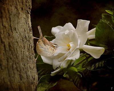 The Scent Of The Gardenia Print by Jai Johnson