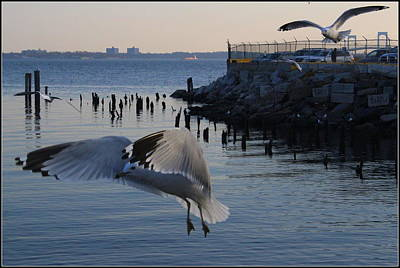 The Seagulls Of City Island Original by Dora Sofia Caputo Photographic Art and Design