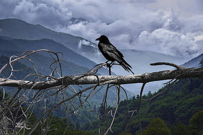 Raven Photograph - The Sentinel by Randall Nyhof