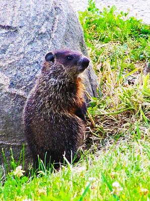 Groundhog Digital Art - The Groundhog Sentinel by Ron  Tackett