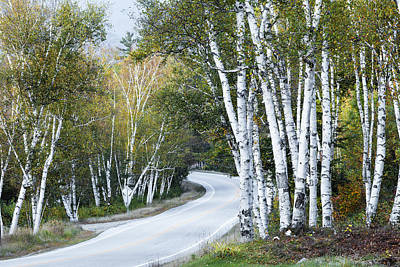 The Shelburne Birches Print by Harry H Hicklin