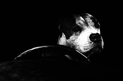 Cute Dogs Photograph - The Siciliana by Erik Brede