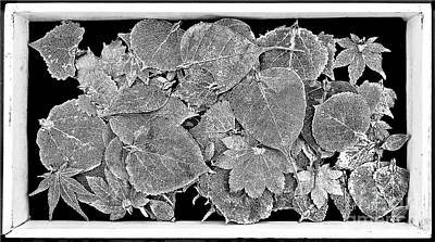 The Silver Leaves B W Original by Fei A