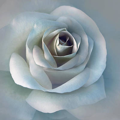 Rose Portrait Photograph - The Silver Luminous Rose Flower by Jennie Marie Schell