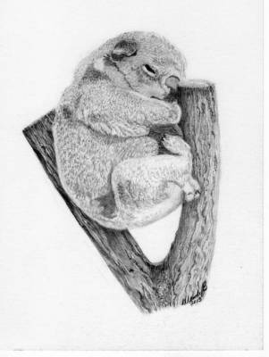 Koala Drawing - The Sleeper by Wendy Brunell