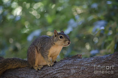Nuts Photograph - The Smile by Hilton Barlow