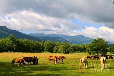 Photograph - The Smokies by Jay Nodianos