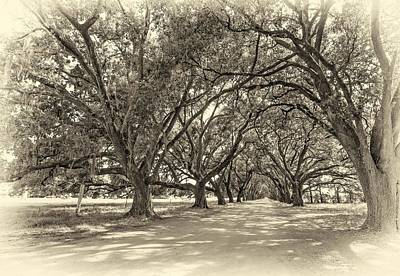 Oak Photograph - The Southern Way Sepia by Steve Harrington