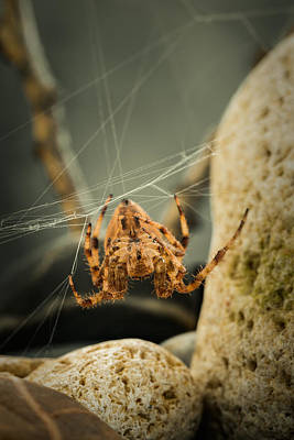Spidey Photograph - The Spectacular Spider I by Marco Oliveira