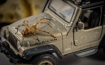 Horror Cars Photograph - The Spider Series I by Marco Oliveira