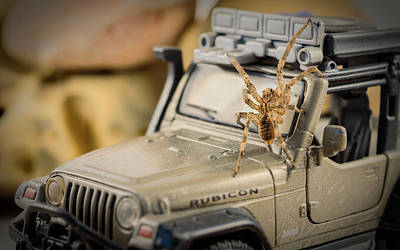 Horror Cars Photograph - The Spider Series IIi by Marco Oliveira