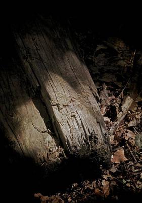 Forest Floor Photograph - The Still Of The Light by Odd Jeppesen