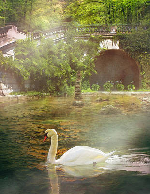 The Swan Lake Print by Pati Photography
