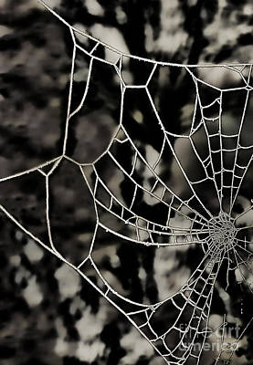 The Tangled Web Print by Sheila Laurens