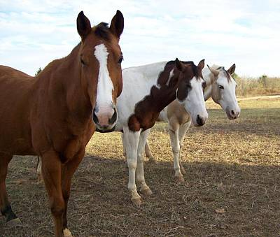 Photograph - The Three Amigos by Cherie Haines