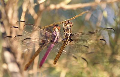 The Three Dragonflies  Print by Saija  Lehtonen