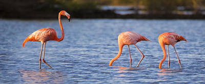 Orange Photograph - The Three Flamingos by Adam Romanowicz