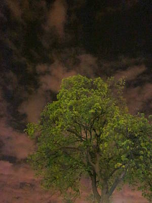 Photograph - The Tree Accepts Me by Guy Ricketts