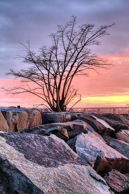 Boro Photograph - The Tree V by JC Findley