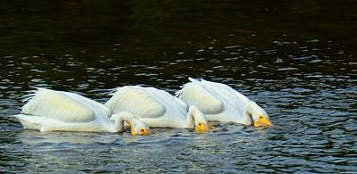 Photograph - The Trio by Patty MacInnis