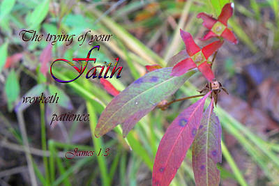 Christian Verse Photograph - The Trying Of Faith by Larry Bishop